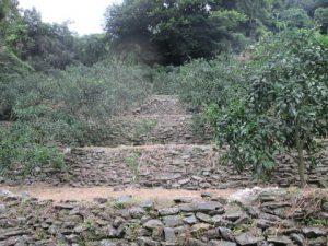 段々畑と石垣