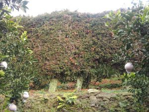石垣と杉垣